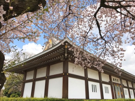 Reihoden and cherry blossoms of Ikegami Honmonji temple