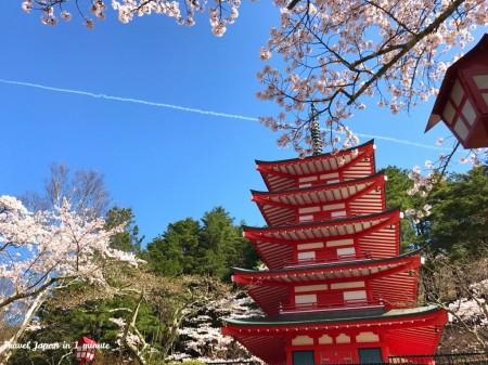 Chureito pagoda and cherry blossoms at Arakurayama Sengen Park