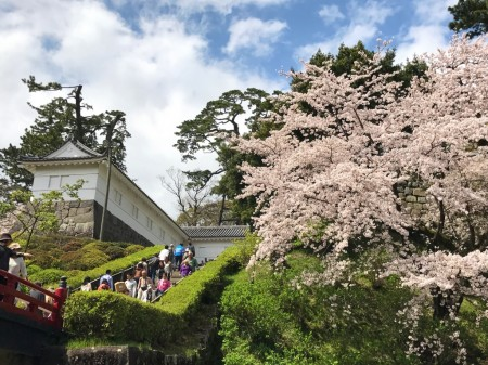Tokiwagi gate and cherry blossoms in Odawara castle