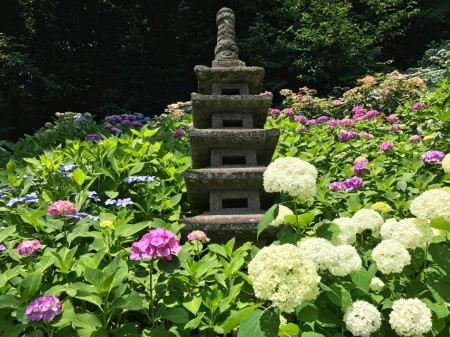 Stone statue and hydrangea at Hase Temple in Kamakura