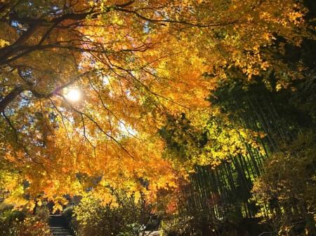 Autumn leaves at Meigetsuin in Kamakura