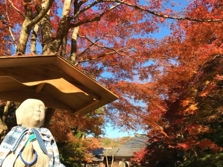 Autumn leaves at inner garden in Meigetsuin in Kamakura