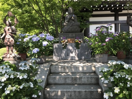 Hydrangea and the Buddha statue at Hase Temple in Kamakura