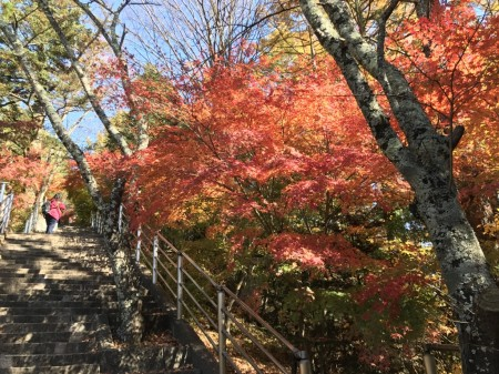 Autumn leaves in Arakurayama Sengen Park