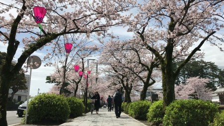 Cherry‐tree‐lined path along the moat of Odawara castle