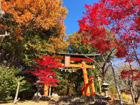 Autumn leaves and Torii gate in Arakurayama Sengen Park