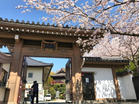 Sanmon gate and cherry blossoms at Ofuna Kannon-ji temple
