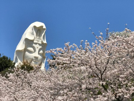 Ofuna Kannon and cherry blossoms