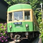 Hydrangea and Enoden line at Goryo Jinja shrine in Kamakura