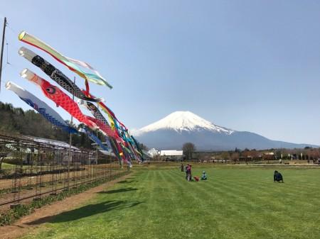 Carp streamer and Mt.Fuji Hanano Miyako Koen park