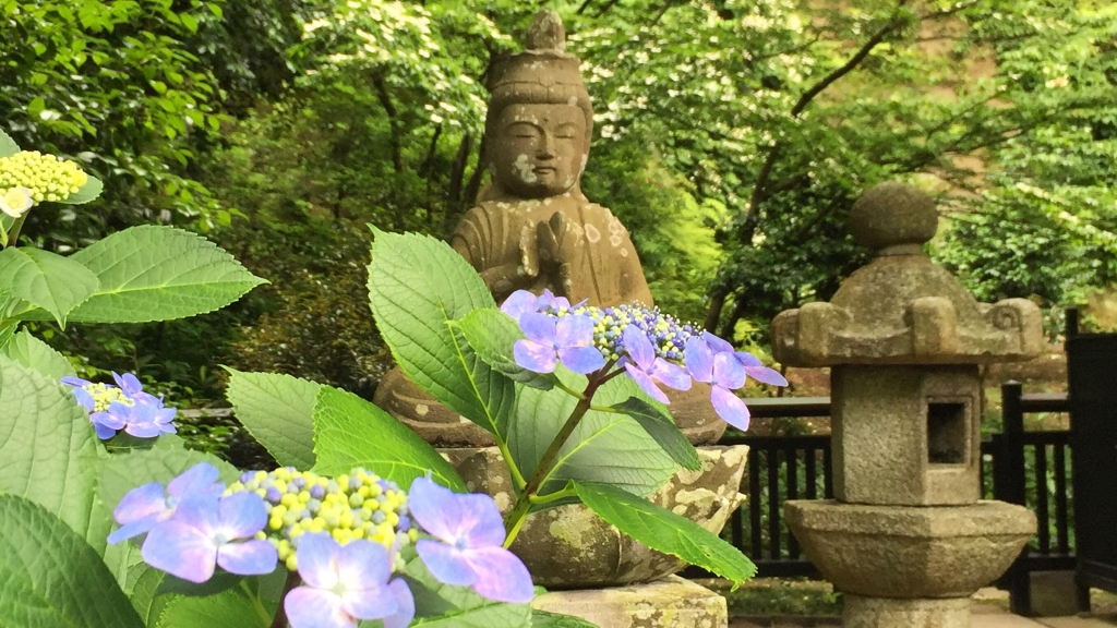 Hidden beautiful place with hydrangea Tokeiji temple in Kamakura
