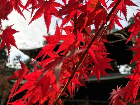 Autumn leaves at Sanmon gate in Engakuji temple