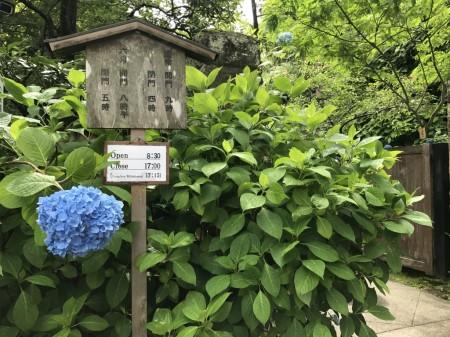 Entrance at Meigetsuin in Kamakura