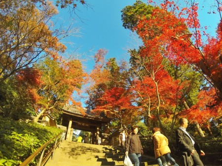 Autumn leaves in Engakuji temple