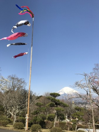Carp streamers and cherry blossoms at Heiwa Koen Park