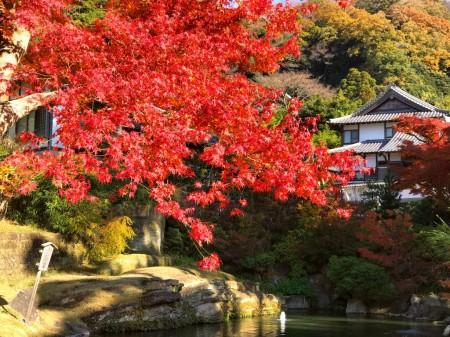 Autumn leaves at Myoko-chi pond in Engakuji temple in Kamakura