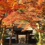Autumn leaves at Kojirin in Engakuji temple in Kamakura