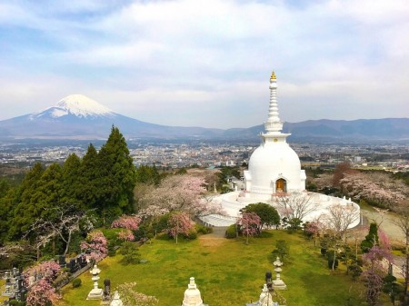 Mount Fuji ,cherry blossoms and stupa at Heiwa Koen Park