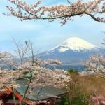 Mount Fuji and cherry blossoms at Heiwa Koen Park