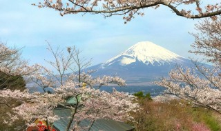 Mount Fuji and cherry blossoms at Heiwa Koen Park