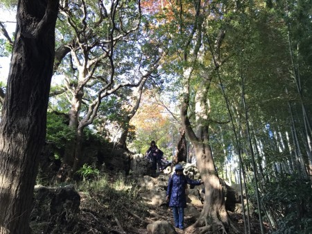 Tenen Hiking Course in Kamakura
