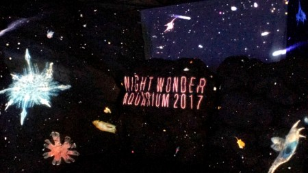 Night Wonder Aquarium in Shin Enoshima Aquarium
