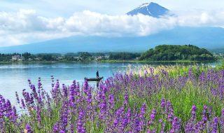 Mount Fuji at Kawaguchiko herb festival2018