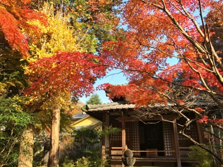 Autumn leaves in Meigetsuin in Kamakura