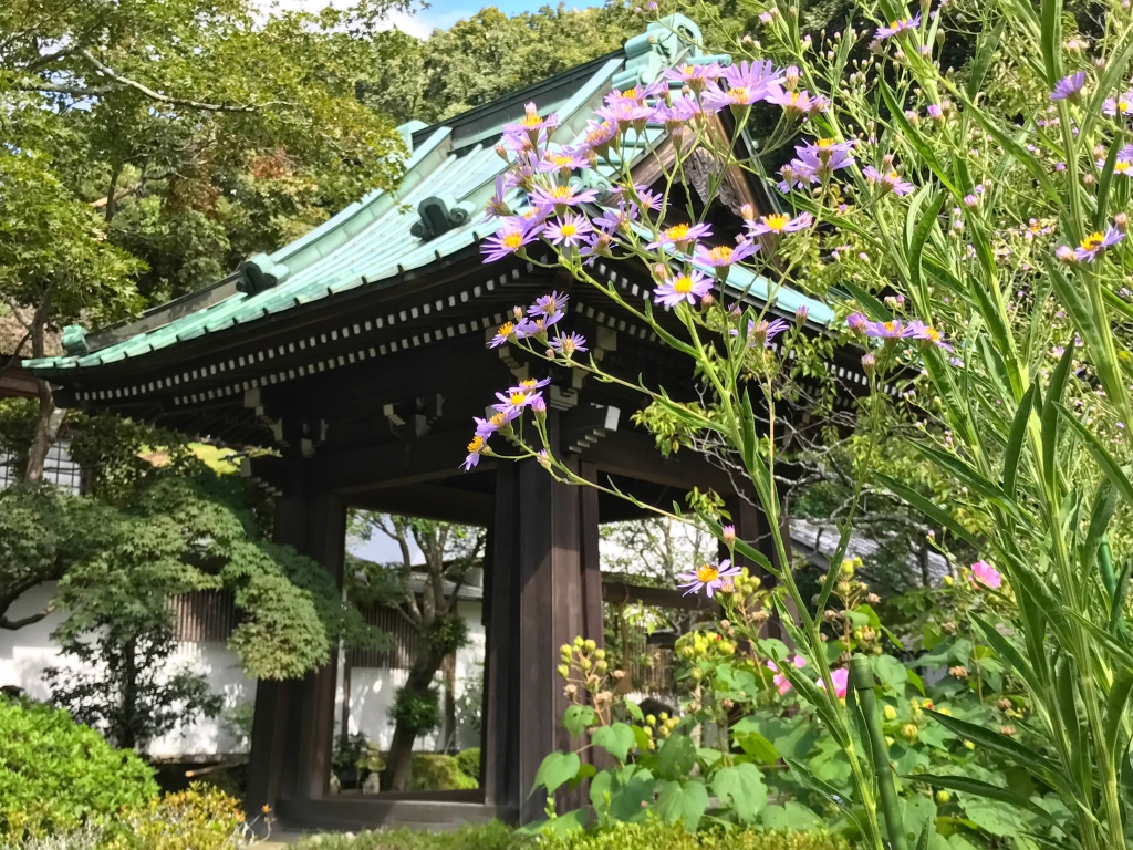 Kaizo-ji temple in Kamakura where you can enjoy flowers all year