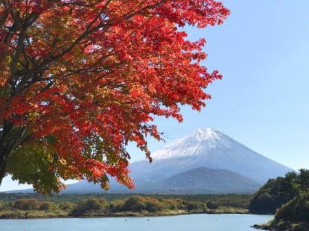 Autumn leaves and Mount Fuji at the lake Shojiko