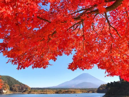 Autumn leaves and Mount Fuji at the lake Shojiko