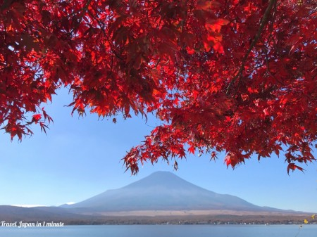 Autumn leaves and Mt.Fuji in lake yamanaka