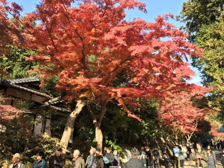 Autumn leaves at Engakuji temple in Kamakura