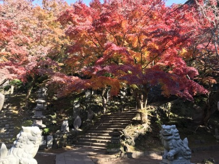Autumn leaves in Hansobo in Kenchoji temple