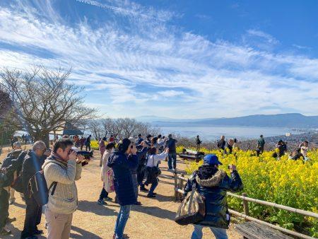 field mustard at Azumayama Park in Ninomiya city