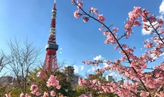 Cherry blossoms at Prince Shibakoen Park