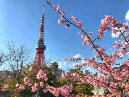Cherry blossoms at the garden of The Prince Park Tower Tokyo