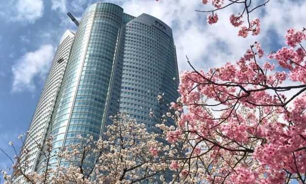 Cherry blossoms in Roppongi Hills