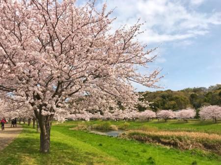 Hikichigawa Shinsui Koen Park