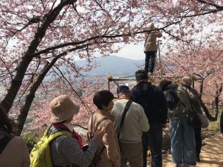 Photo spot at Matsuda Cherry Blossom Festival
