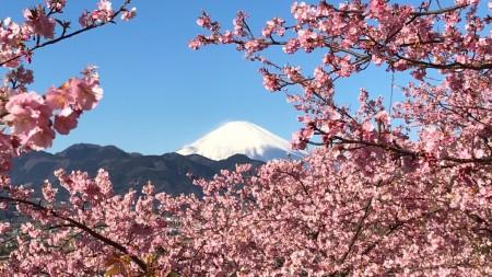 Matsuda Cherry Blossom Festival 2017