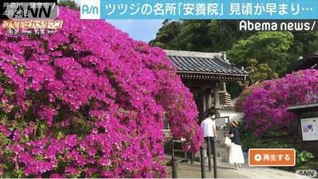 Abema News Azalea at Anyo-in temple