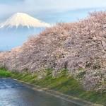 cherry blossoms and Mt.Fuji at Ryuganbuchi