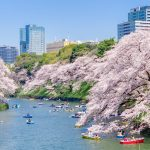 Cherry blossoms at Chidorigafuchi-ryokudo Walkway 2019