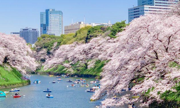 Cherry blossoms at Chidorigafuchi-ryokudo Walkway 2019