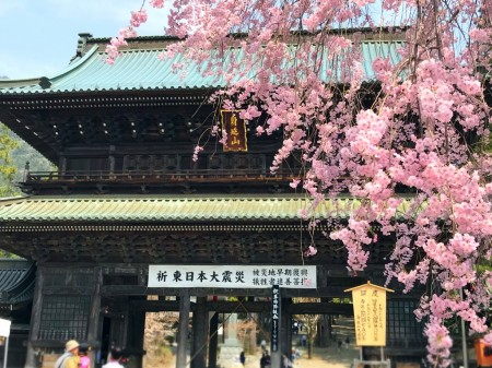 Sanmon gate and cherry blossoms in Kuonj-ji temple
