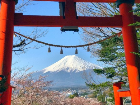 Cherry blossoms,Mt.Fuji and Torii gate in Arakurayama Sengen Park