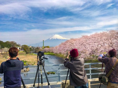 cherry blossoms and Mt.Fuji from Takito-Bashi bridge at Ryuganbuchi
