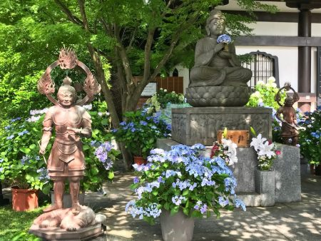 Buddha statue and hydrangea in Hase temple