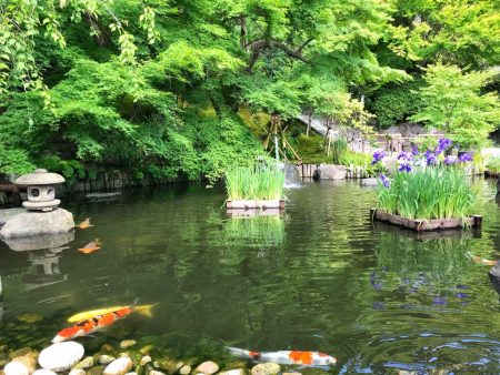 Iris at Japanese garden with pond in Hase temple